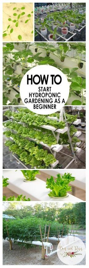 diy hydroponics systems builder guide
