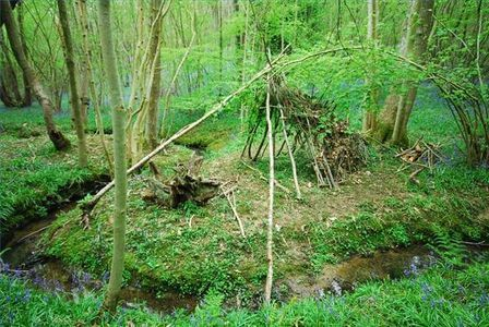 wilderness survival guide for kids