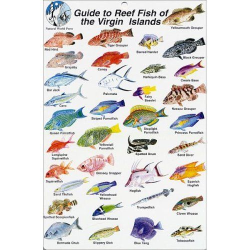 red sea fish guide pdf