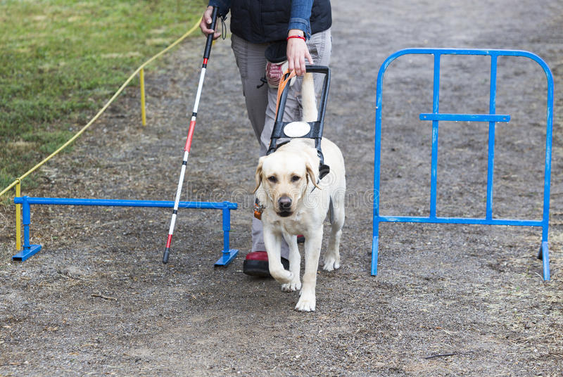 how are guide dogs trained
