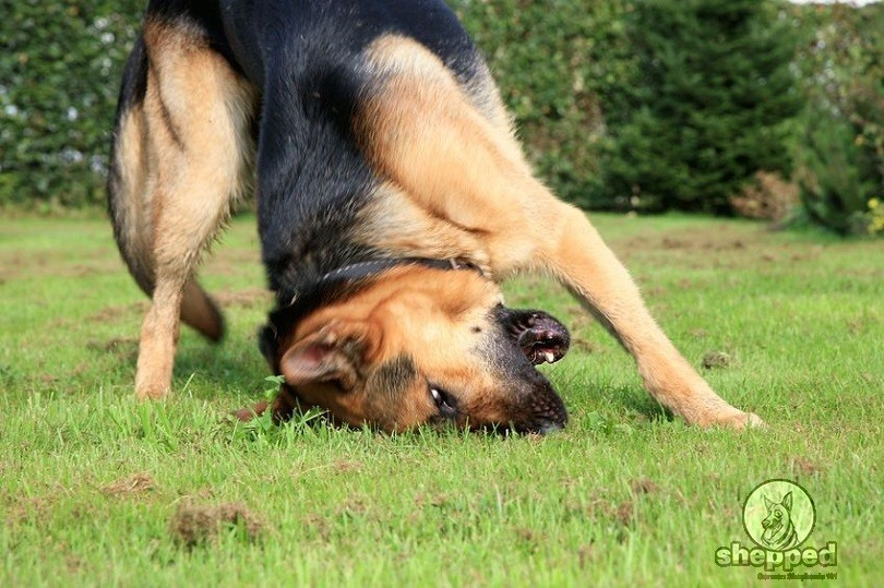 how long does it take to train a guide dog